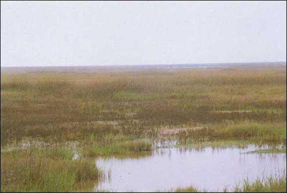 File:Lrg marsh barrier island 3.jpg