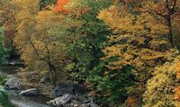 Eastern-deciduous-forest-in-autumn
