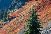 Mt baker wilderness-31