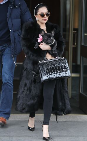 File:12-22-14 Leaving her apartment in NYC 001.jpg
