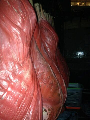 File:The Born This Way Ball Meat 001.jpg