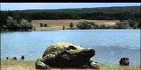 Alpha Crocodile