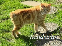 File:Sandstripe.jpeg