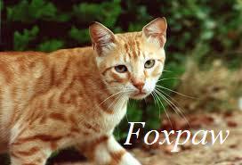 File:Foxpaw.jpeg