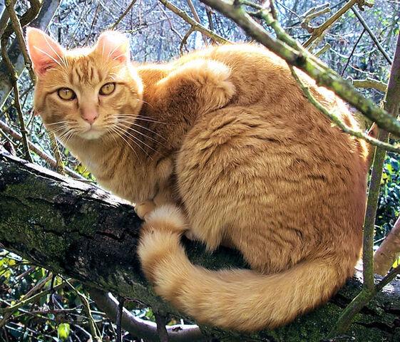 File:Tresire cat by kitsunekko.jpg