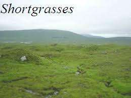 File:Shortgrasses.jpeg