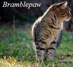 File:Bramblepaw.jpeg