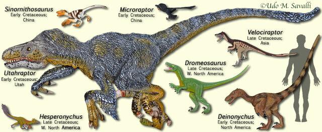File:DromeosaurModels.jpg