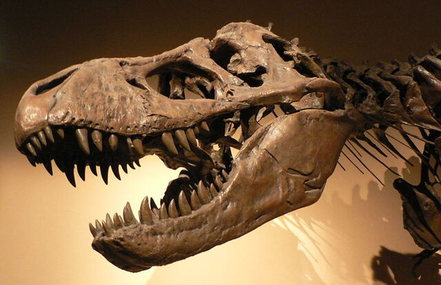 File:T-rex skull.jpg