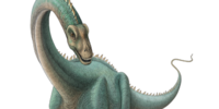 Kaatedocus