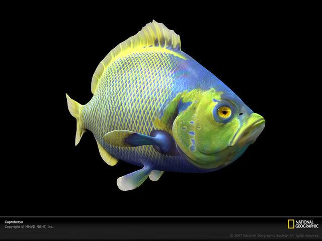 File:Caproberyx-0.jpg