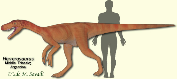 File:HerrerasaurusModel.jpg