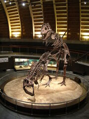 Courting Trex fossils