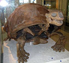 652px-Colossochelys atlas