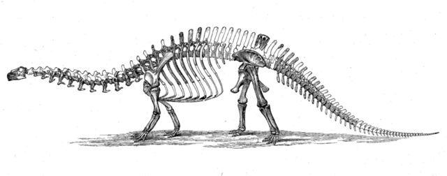File:Brontosaurus skeleton 1880s.jpg