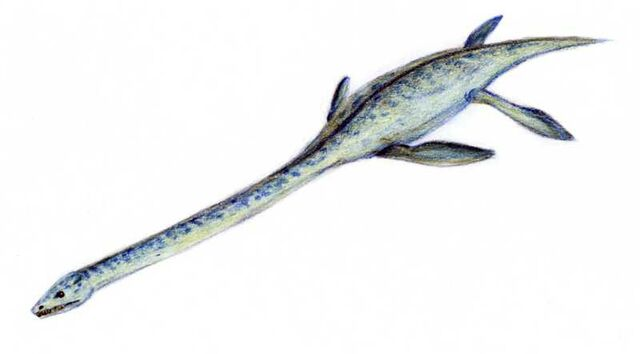 File:Elasmosaurus2.jpg