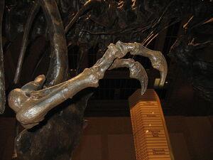 T.rex arm