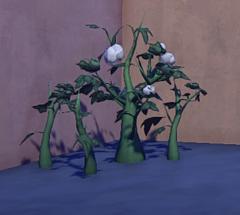 Cotton Plant prop placed