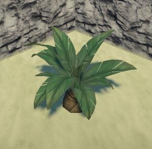Jungle-palmetto