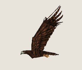 File:Eagle 4.jpg