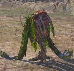 Rotten Plant