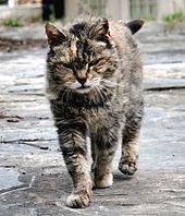 File:Feral Farm Cat.jpg