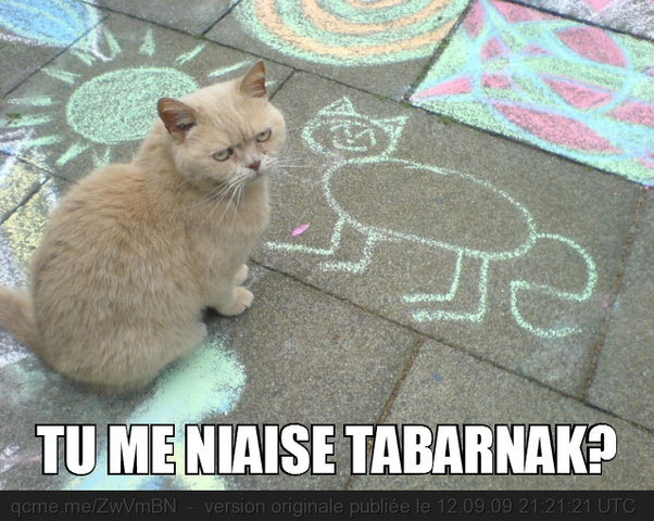 File:Kitty Tabarnak a cat.png