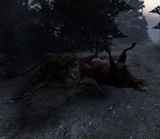 File:Dead bovine.jpg
