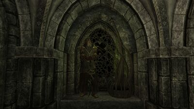 Dragonborn display