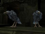 SR2-Animals-Crows