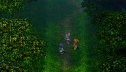 Mistwaldforest