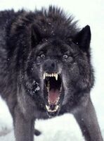 insanity wolf legends of the multi universe wiki fandom