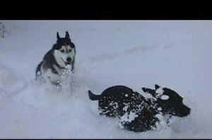 Mishka and moki running