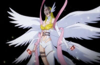 Angewomon with cards