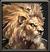 Komareo Icon