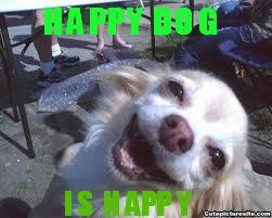 File:PuppyMeme.jpg