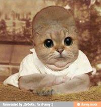 File:Baby cat.jpg