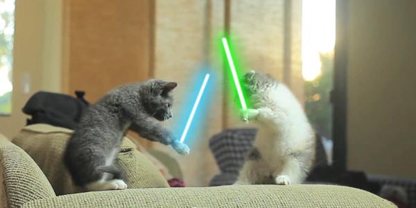 File:Jedi kitten.jpg