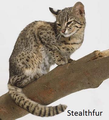File:Stealthfur.png