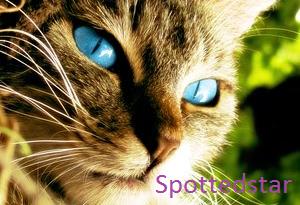 Spottedstar