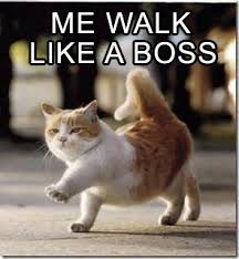 File:Bosscat.jpg