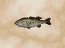 File:Black Bass.png
