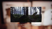 Note ForestPhoto