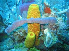 400px-Reef3859 - Flickr - NOAA Photo Library
