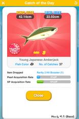 Young Japanese Amberjack