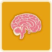 File:Brain pink n orange.jpg