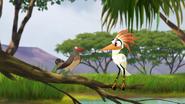 Ono-the-tickbird (340)