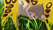 Baboons (336)