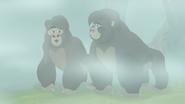 The-lost-gorillas (291)