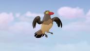 Ono-the-tickbird (263)